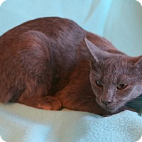 Adopt A Pet :: Elaina - Spring Valley, NY