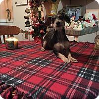 Adopt A Pet :: Abby - Kittery, ME