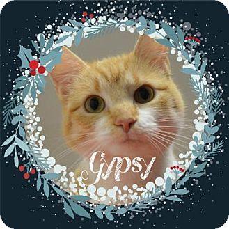 Manx Cat for adoption in Monroe, Michigan - Gypsy