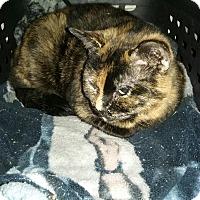 Adopt A Pet :: Alyssa - Swansea, MA