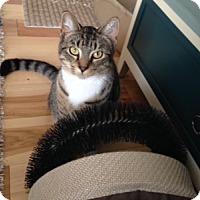 Adopt A Pet :: Bootsy - Cincinnati, OH