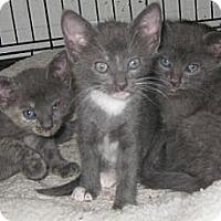 Adopt A Pet :: Blueberry - Dallas, TX