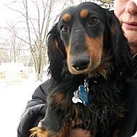 Adopt A Pet :: Lucky - West Bloomfield, MI