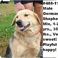 Adopt A Pet :: # 488-11 - ADOPTED! - Zanesville, OH