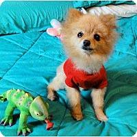 Adopt A Pet :: Sunny - Mooy, AL