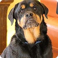 Adopt A Pet :: Roxi - Ft. Lauderdale, FL