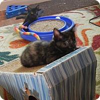 Adopt A Pet :: Rosie - Southington, CT