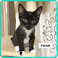 Adopt A Pet :: Panda - Miami, FL