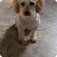 Adopt A Pet :: Lance - Mount Gretna, PA
