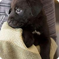Adopt A Pet :: Hunter - Marlton, NJ