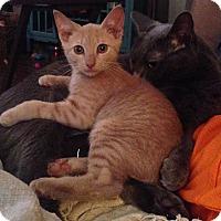 Adopt A Pet :: Auggie - Richmond, VA