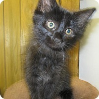 Adopt A Pet :: Curly - Oxford, NY