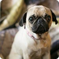 Adopt A Pet :: Rosie - Pismo Beach, CA