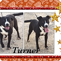 Adopt A Pet :: Turner-in CT - Manchester, CT