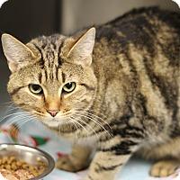 Adopt A Pet :: Abby - Marietta, GA