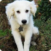 Adopt A Pet :: Primrose - Kyle, TX
