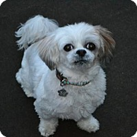Adopt A Pet :: Mousse 3135 - Toronto, ON