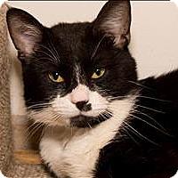 Adopt A Pet :: Pat - Birmingham, AL