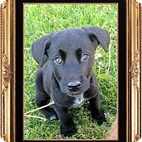 Adopt A Pet :: Vader - Genoa City, WI