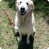 Adopt A Pet :: Maggie VII - BIRMINGHAM, AL