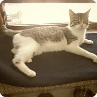 Adopt A Pet :: NEVEL'S - Medford, WI