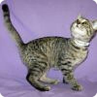 Adopt A Pet :: Esmerelda - Powell, OH