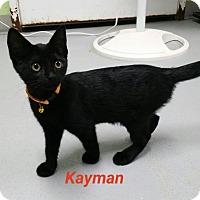 Adopt A Pet :: kayman - Muskegon, MI