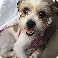 Adopt A Pet :: Merryweather - Davie, FL