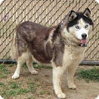 Adopt A Pet :: *DARLA - Norco, CA