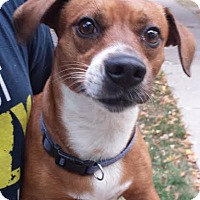 Adopt A Pet :: Russell-Adopted! - Detroit, MI