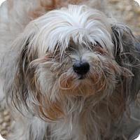 Adopt A Pet :: Diane - Philadelphia, PA
