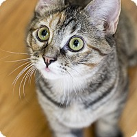 Adopt A Pet :: Mari - Chicago, IL
