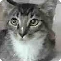 Adopt A Pet :: Matrix - Eureka, CA