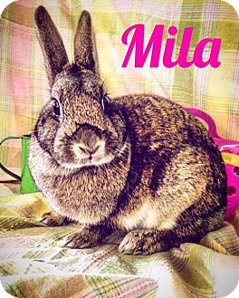 Other/Unknown Mix for adoption in Paramount, California - Mila