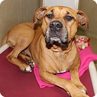 Adopt A Pet :: 23452 - Ziggy - Ellicott City, MD