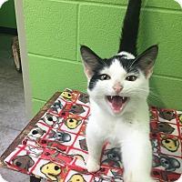 Adopt A Pet :: ellen - Bryan, OH