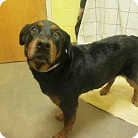 Adopt A Pet :: LADY - Upper Marlboro, MD