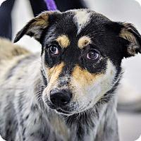 Adopt A Pet :: Macy - Martinsville, IN