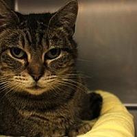 Adopt A Pet :: Isadora - Anderson, IN