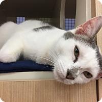 Adopt A Pet :: Riley - Islip, NY