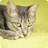 Adopt A Pet :: Sammie - San Antonio, TX