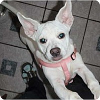 Adopt A Pet :: Annie - New Boston, NH