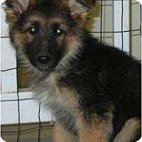 Adopt A Pet :: Chelsea ADOPTION PENDING! - Antioch, IL