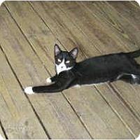 Adopt A Pet :: Bently - Clay, NY
