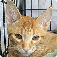 Adopt A Pet :: Cubby - Winchester, CA