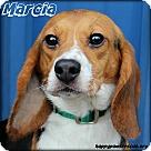 Adopt A Pet :: Marcia Brady