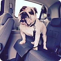 Adopt A Pet :: Magoo - Columbus, OH
