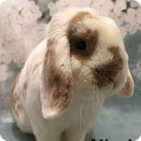 Adopt A Pet :: Nigel - Auburn, CA
