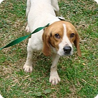 Adopt A Pet :: Rolly - Dumfries, VA