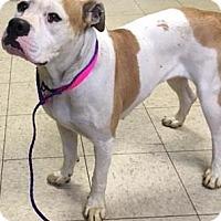Adopt A Pet :: California - Cleveland, OH